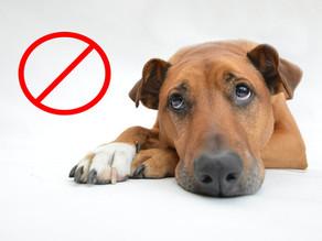 🚫 4 choses à ne pas faire avec son chien 🚫