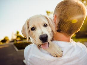 Comment choisir le chien qui nous correspond  ? 🐶👍