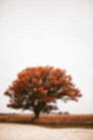 Constable_tree.jpg