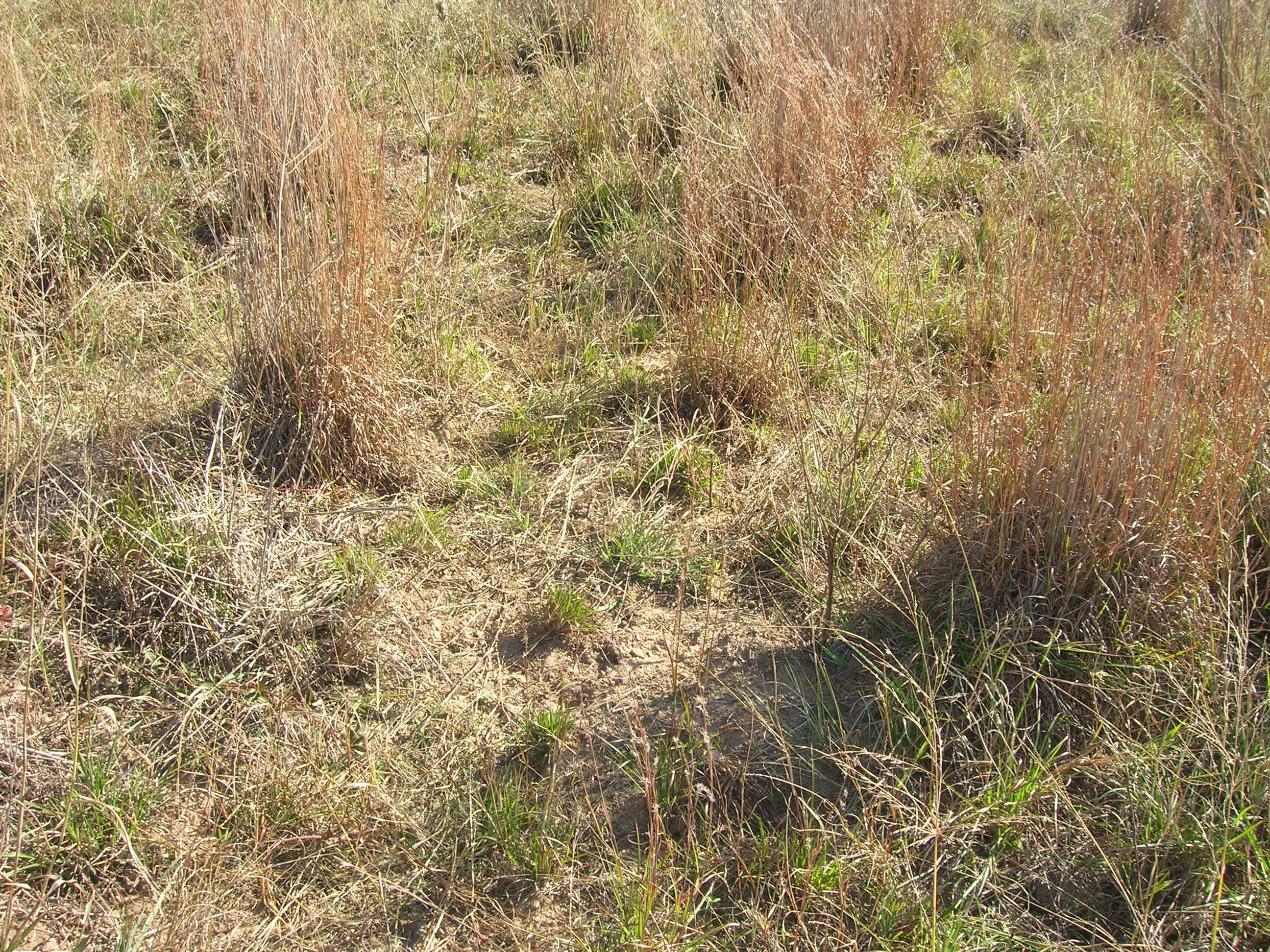 Native Grass Restoration