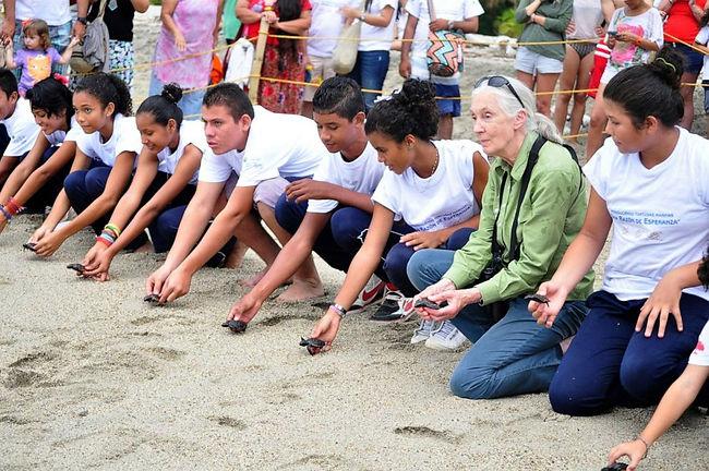 Santa Marta, Columbia, release baby sea
