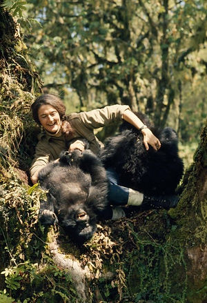 Dian Fossey plays with two young mountai