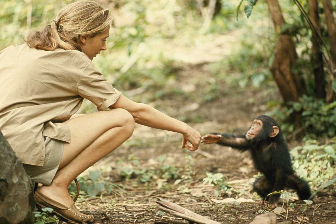 Jane Goodall and infant chimpanzee Flint