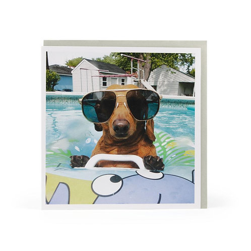 Bitches Know The Dachshund Is Cool
