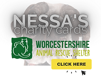 charity cards.png