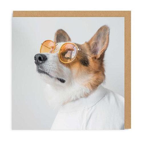 Sunglasses Corgi