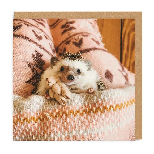 Hedgehog in Bed