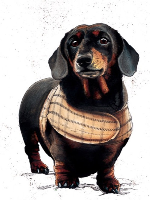 Arthur The Dachshund