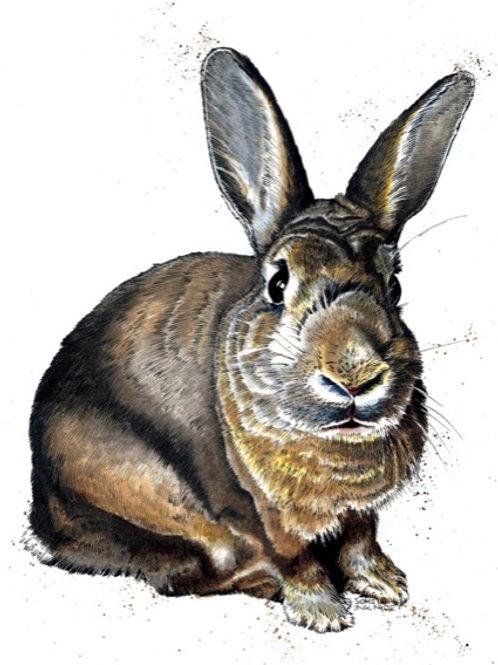 Meg The Bunny