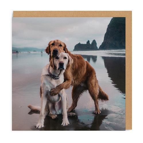 Beach Dogs Hug