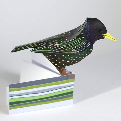 Starling 3-D Pop-Up