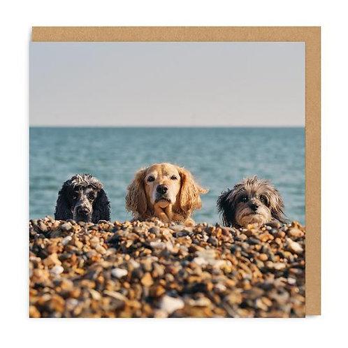 Three Beach Dogs
