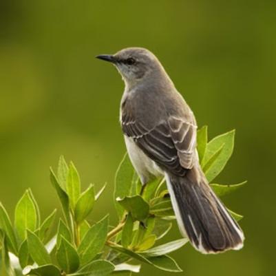 Birding Basics in Los Angeles