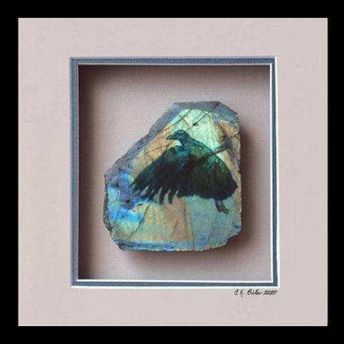 Nikobar Pigeon  8x8