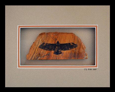 Wingspan of Hawk, 8x10 Photogem