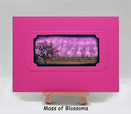 Mass of Almond Blossoms PhotoCard