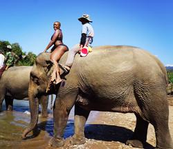 Elephant Village, Laos