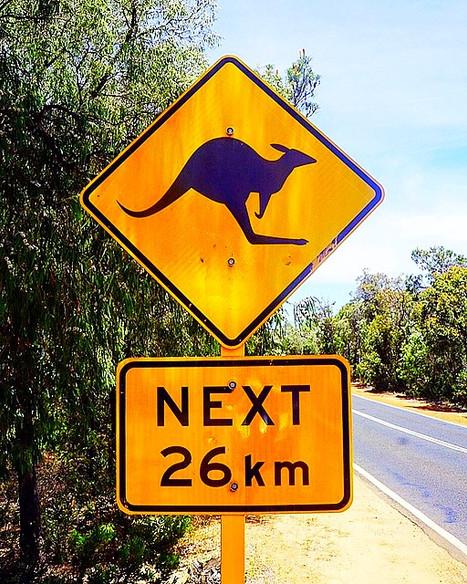 Down Under: Australian Wildlife