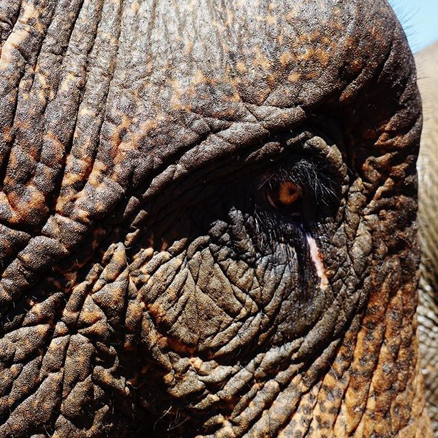 Elephant Sanctuary, KL, Malaysia