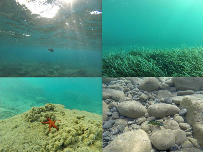 underwater paradise greece with starfish