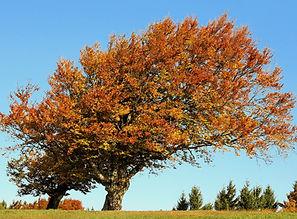 tree-2812466_1920.jpg