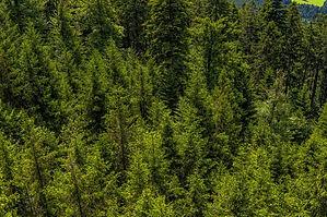 forest-2513915_1920.jpg