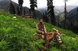 Gujjar-on-horse