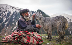 Bakerwal-with-Goat-01