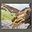 Thumbnail: Duckpool Cliff. 1.12.2020
