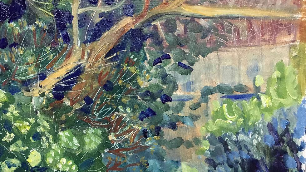Corner of the garden 20.11.20