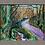 Thumbnail: Bucks Mill Woods I