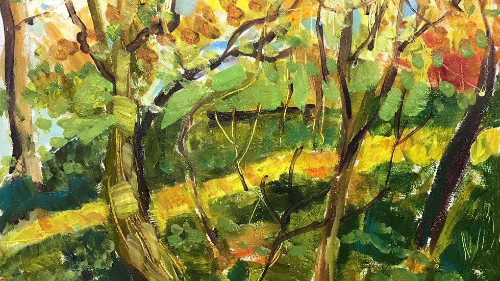 BucksValley Wood 5.11.2020