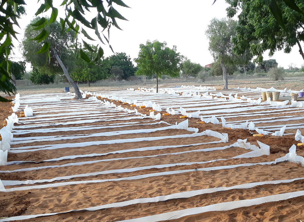 BeTsiry - hydroponic sand flow beds