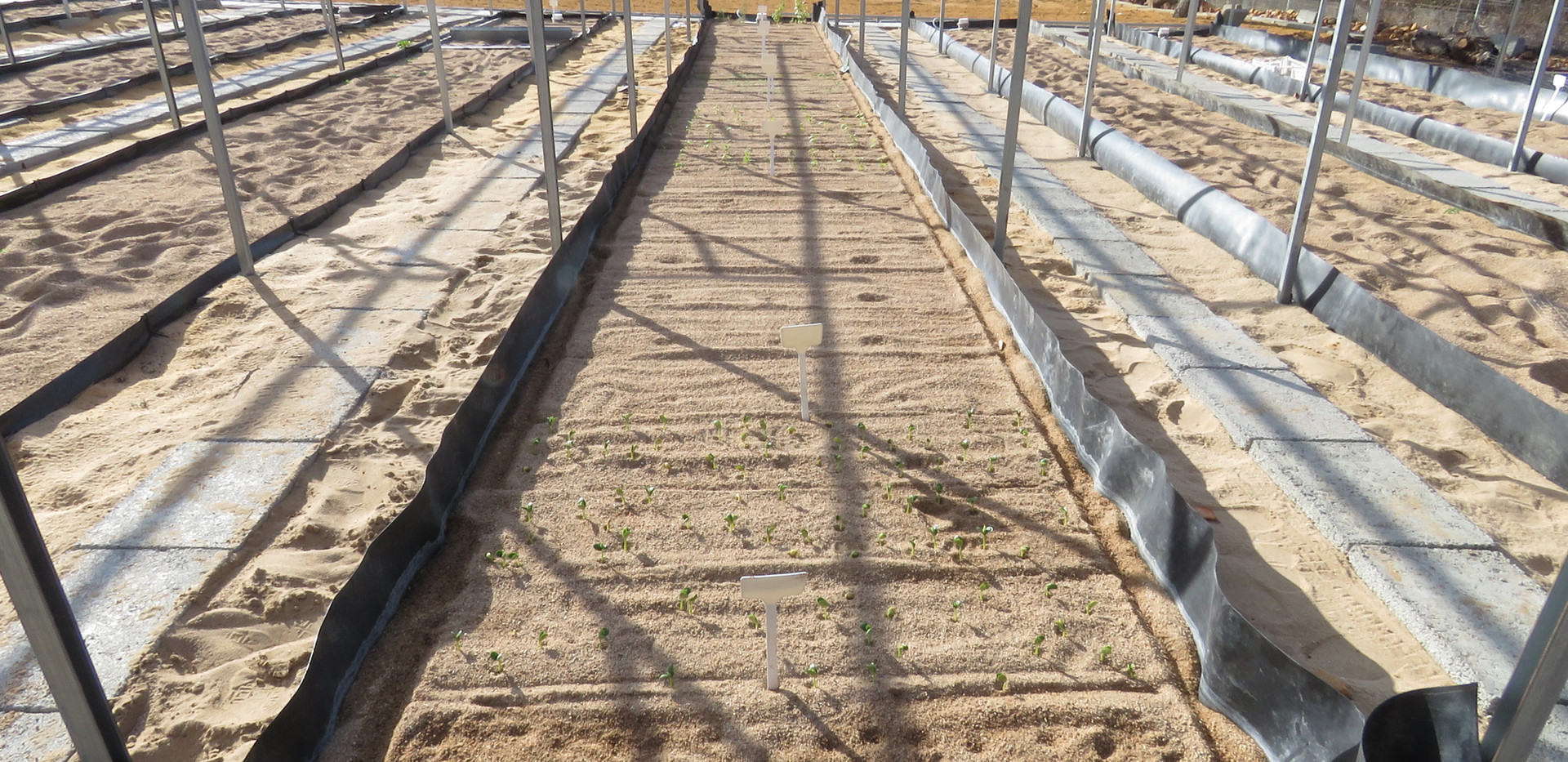 hydroponic sand flow beds