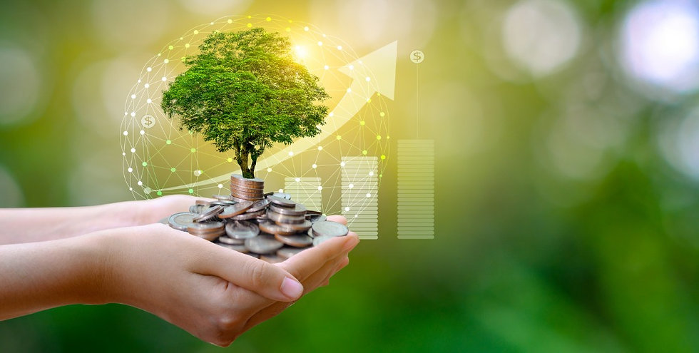 hand-coin-tree-the-tree-grows-on-the-pil