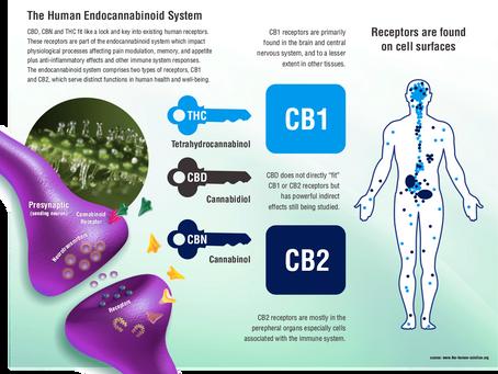 NW University Study Shows Pediatric Brain Tumors Shrunk by Cannabinoids in the Body