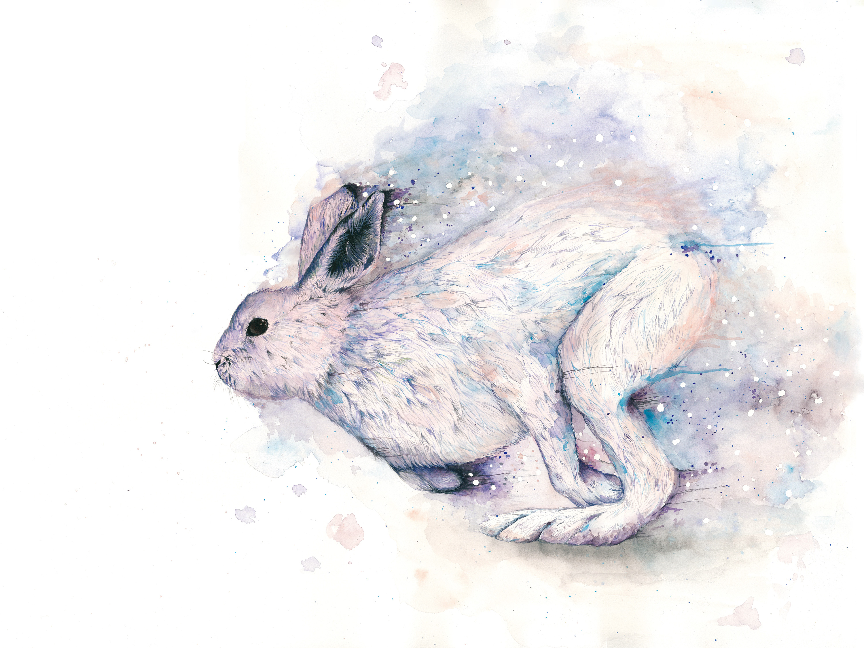 「Mountain rabbit」