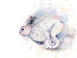 「Mountain rabbit」