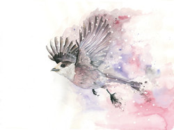 「If I was a bird」