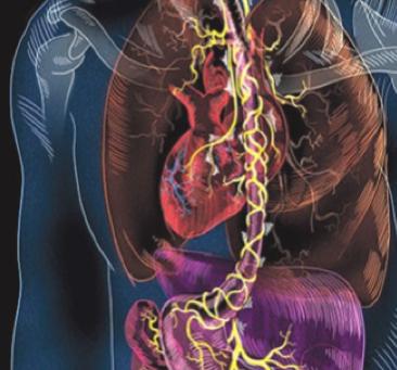 Le nerf vague, l'axe intestin-cerveau et le système immunitaire