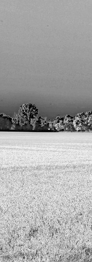 Distant Field