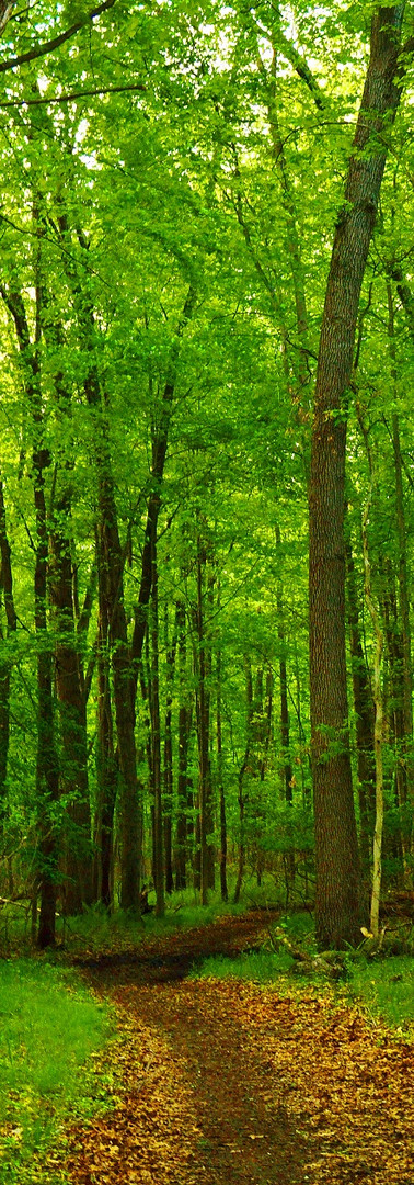 Path of Green Trees