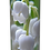 Custom Personalised Cremation Ashes Casket Urn FLORAL LILY OF THE VALLEY