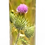 Custom Personalised Cremation Ashes Casket Urn Scenic Landscape THISTLE