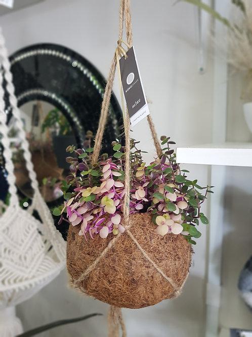 Kokodama 15cm & 17cm Hanging Plants