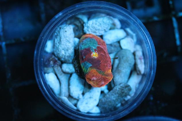 Pastel Rainbow Chalice