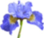02_flower.png