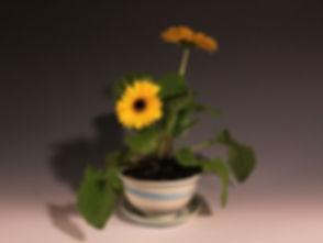Flower pot 2 800x600.jpg
