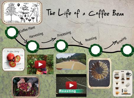VÒNG ĐỜI CỦA HẠT CAFE