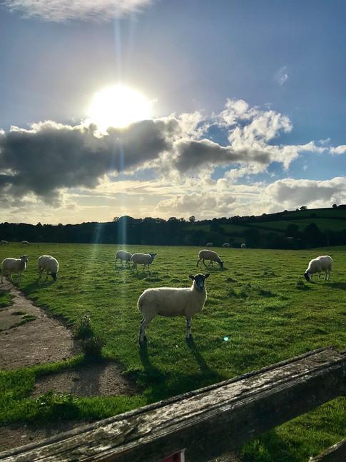 Heron cottage garden view - The sheep